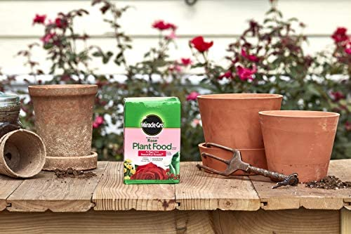 Rose planta _image4