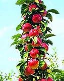 100pcs Semillas - Bonsai Columnar Apple Tree Semillas Fruit Plant Tree Semillas