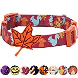 Blueberry Pet 8 Patterns Thanksgiving Fall Fun Enchanting Squirrel Designer Dog Collar with Maple, Large, Neck 18''-26'', Adjustable Collars for Dogs