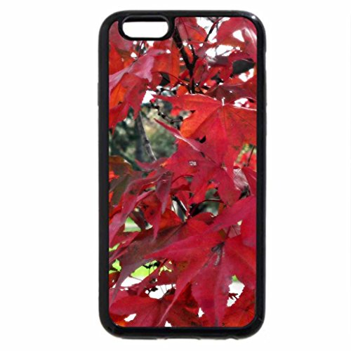 iPhone 6S / iPhone 6 Case (Black) Ravishing Autumn Red