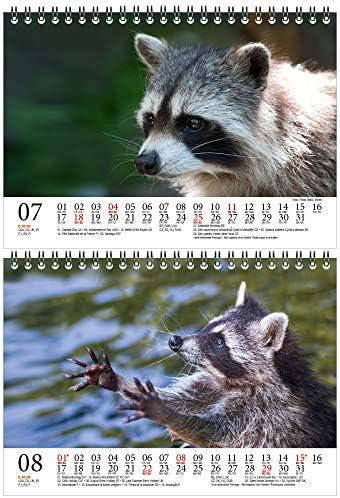 Waschbärenzauber DIN A5 Tischkalender für 2021 Waschbären - Geschenkset Inhalt: 1x Kalender, 1x Weihnachts- und 1x Grußkarte (insgesamt 3 Teile)
