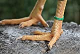 Chicken Hill 30 ZBand Numbered Poultry Leg Bands