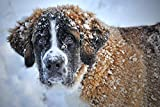 Adult Puzzle Jigsaw 1000 Pieces Dog in The Snow.Best Gift for Children Or