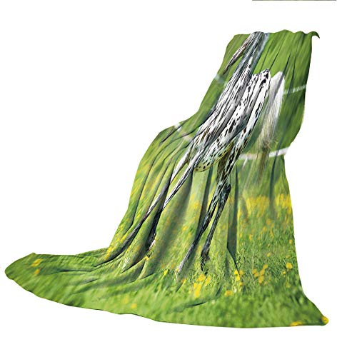 SCOCICI Super Thick Flannel Double-Sided Printing Blanket,Horse Decor,Appaloosa Horse Runs Trot on The Meadow in Summer Time Farmhouse Rural Decorative,Green Black White,31.50