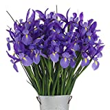 Stargazer Barn - Large Bouquet Of Telstar Iris With Vase - Farm Direct