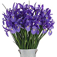 Stargazer Barn - 40 Stems of Premium Telstar Iris with French Bucket Style Vase - Farm Fresh