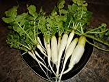 300+ Radish Seeds- Daikon Minowase by Ohio Heirloom Seeds