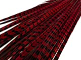20-22'' Wine Red Ringneck Pheasant Tail Wholesale Feathers, 50 Pieces