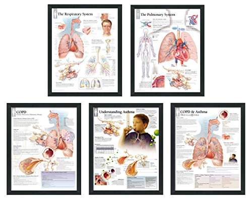 set of 5 framed medical posters the respiratory system the