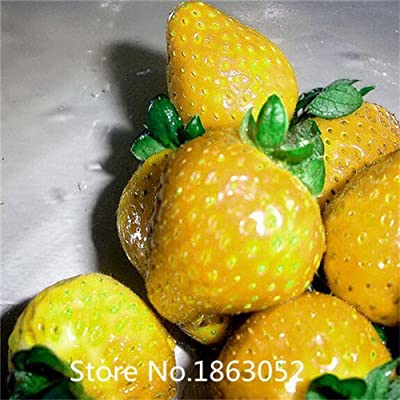strawberry seeds mixed colors include White Black Blue Giant Red Yellow Red Climbing fruit Seeds 300pcs total Flower Seeds Free