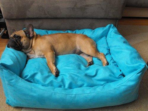 Hundebett+Hundekissen Hundesofa Hundekorb Tierbett Verschiedene Größen und Farben (Größe 2 -  70cm x 55cm x 25cm, türkis)