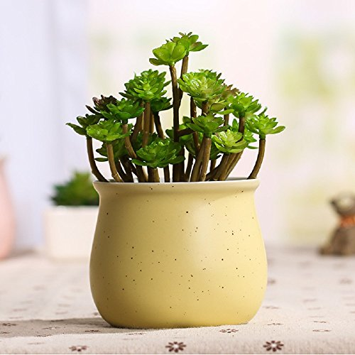 GeLive Macaron Colorful Succulent Container product image