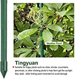 Tingyuan Garden Stakes 48 Inches Steel Plant