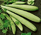 1 oz Seeds Cucumber Armenian Pale Yard Long