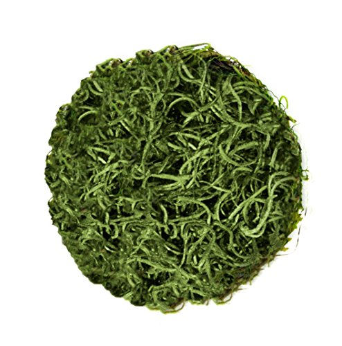 Cheap  SuperMoss (27046) Spanish Moss Ball, Grass Green, 6