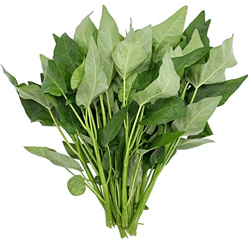Ong Choy Large-Leaf Vegetable Seeds 20G for Home and Garden Planting