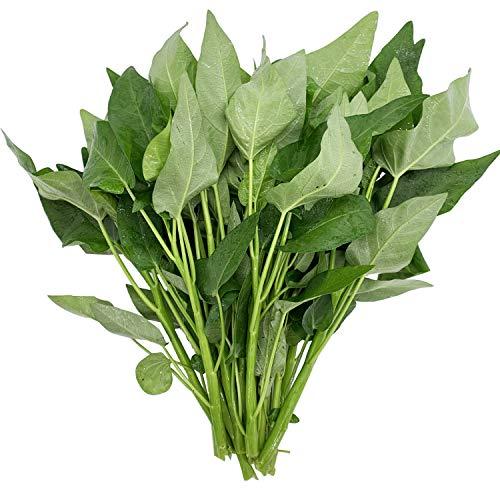 Ong Choy Large-Leaf Vegetable Seeds 20G for Home and Garden Planting (Best Home Garden Vegetables)
