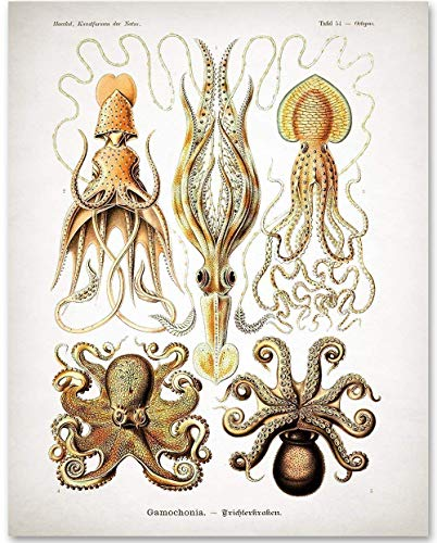 (Antique Octopus Print - 11x14 Unframed Art Print - Makes a Great Gift Under $15 for Wall Decor)