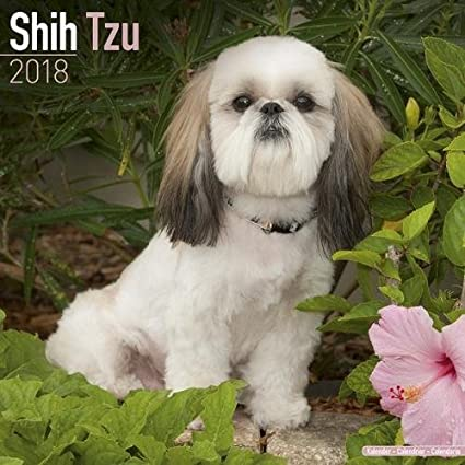 Shih Tzu Calendar Dog Breed Calendars 2017 2018 Wall Calendars