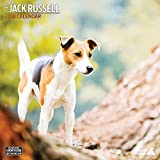 Jack Russell 2018 Traditional Wall Calendar