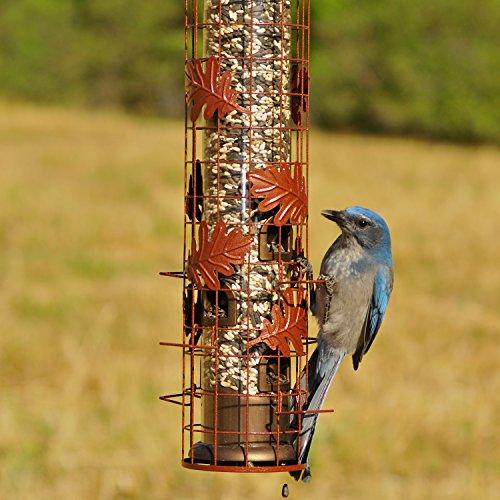 Buy worlds best bird feeder