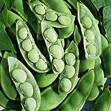 David's Garden Seeds Bean Lima Fordhook 242 D49A (Green) 25 Heirloom Seeds