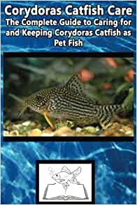 Corydoras Catfish Care The Complete Guide To Caring For