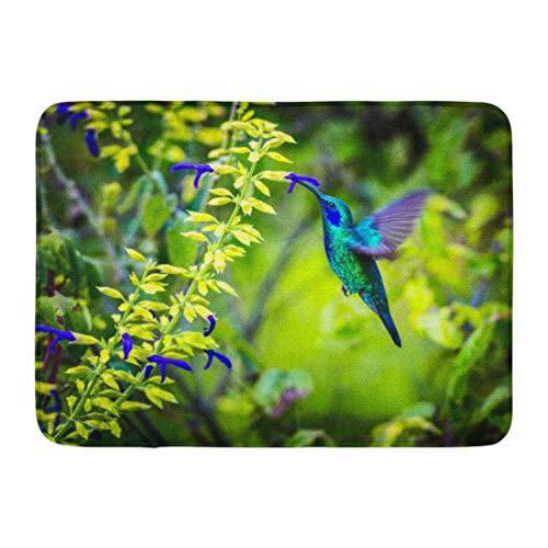 Feeder Hummingbird Gold (Emvency Doormats Bath Rugs Outdoor/Indoor Door Mat The Incredibly Beautiful Green Violet Eared Hummingbird in Central Mountains of Mexico This is Rare Bathroom Decor Rug 16