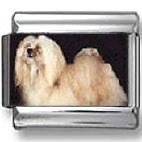 Lhasa Apso Dog Photo (Lhasa Apso Dog Photo Italian Charm)