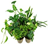 CLEAN AIR Houseplant Multi-pack Gift Collection