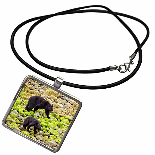3drose-vwpics-animals-black-bear-mother-with-two-cubs-walks-beach-in-search-of-foodvancouver-islandb