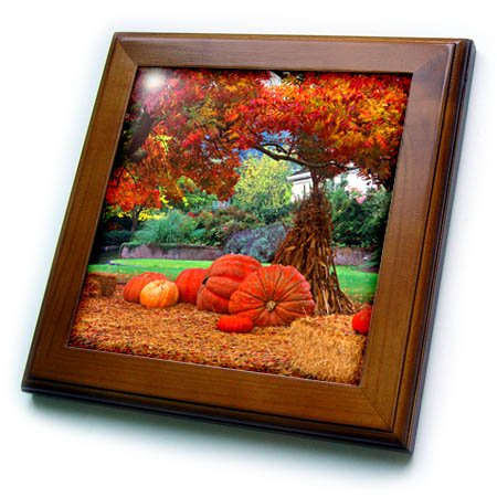 3dRose Halloween Decorations of Pumpkins and Corn Stalks in Front of A Home Framed Tile 6 x 6