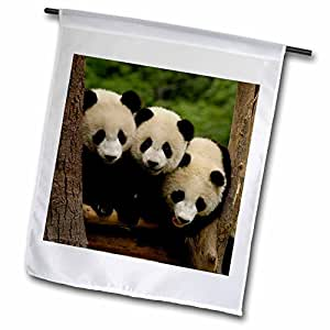 "3dRose fl_70209_1 ""Giant Panda Bears, Wolong China Conservation - Pete Oxford"" Garden Flag, 12 x 18"""