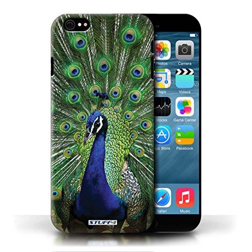 Kobalt Pavone stampato Custodia Cover per Apple iPhone 6/6S cellulari telefoni / Collezione Animali selvatici