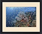 Framed Print of Indonesia, Papua, Raja Ampat. Underwater scenic of fish and coral