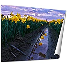 Ashley Giclee Fine Art Print, Daffodils Fild At Sunset And Reflection In Water, 16x20, AG6541009