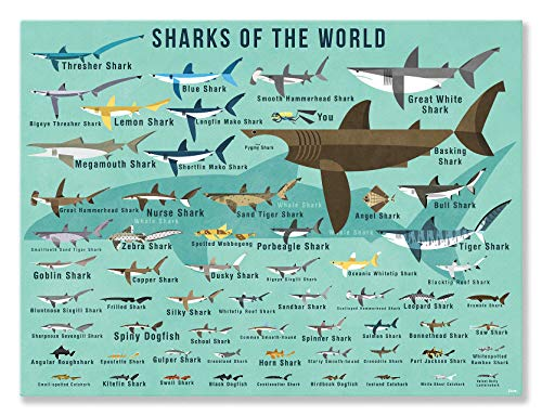 (Oopsy Daisy Fine Art for Kids Sharks of The World Canvas Wall Art by Daviz, 24 x 18)