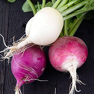 Easter Egg Blend Radish Seeds - Heirloom Garden Seeds, Non-GMO - Vegetable Gardening and Micro Greens