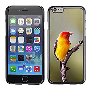 Plastic Shell Protective Case Cover || Apple iPhone 6 Plus 5.5 || Songbird Spring Nature Branch @XPTECH