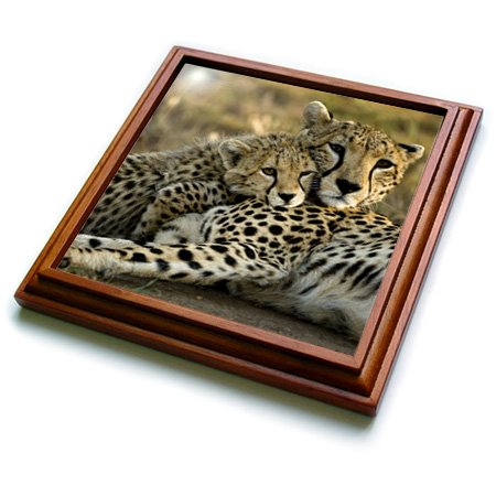 (3dRose trv_71059_1 Cheetah with Cub in The Masai Mara Gr, Kenya AF21 JMC0167 Joe and Mary Ann Mcdonald Trivet with Ceramic Tile, 8 by 8