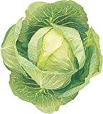 buy #1307 *MONSTER GIANT RUSSIAN CABBAGE* 150 SEEDS now, new 2019-2018 bestseller, review and Photo, best price $2.50