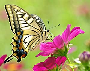 Wildflower Butterfly Mix - 1000+ Seeds