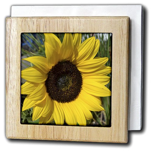 Patricia Sanders花 – 黄色のsunflower-夏flowers-マクロ – タイルナプキンホルダー 6 inch tile napkin holder nh_36222_1 6 inch tile napkin holder  B006J0IKD4