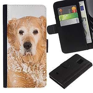 EuroCase - Samsung Galaxy S5 Mini, SM-G800, NOT S5 REGULAR! - golden retriever winter snow white - Cuero PU Delgado caso cubierta Shell Armor Funda Case Cover