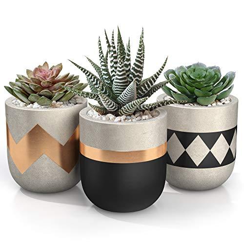 3 inch Small Succulent Pots with Drainage - Set of 3 Concrete Planter Pots for Succulent Plants - Cement Planter Cactus Pots - Use as Succulent Planter, Cactus Pot, Mini Succulent Pots, Cactus Planter