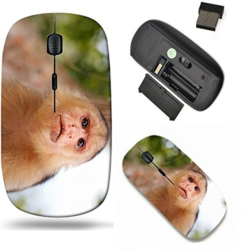 (Liili Wireless Mouse Travel 2.4G Wireless Mice with USB Receiver, Click with 1000 DPI for notebook, pc, laptop, computer, mac book Head of White Faced Capuchin monkey national park Cahuita Caribbean C )
