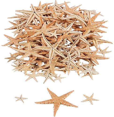 mini sugar starfish