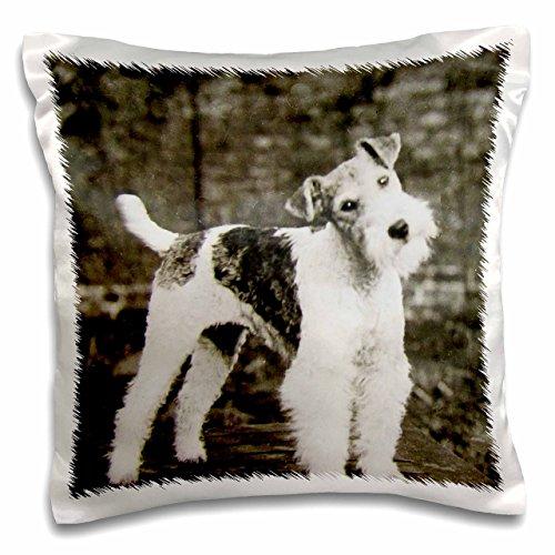 3D Rose Vintage Wire Hair Fox Terrier Dog Circa 1900 Edwardian Era Pillow Case, 16