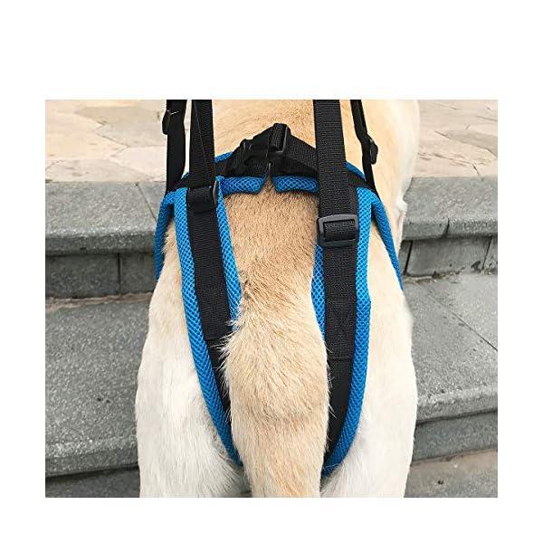 ZEEY Pet Dog Canine Sling Dog Lift Harness Dog Leg Brace Adjustable Straps for Hind Back Leg – Help Support Balance Dogs… Click on image for further info. 6