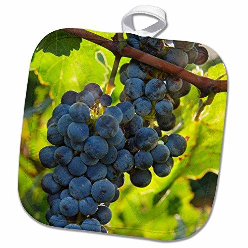 3drose-danita-delimont-grapes-china-xinjiang-xinjiang-uyghur-manas-cabernet-sauvignon-grapes-8x8-pot
